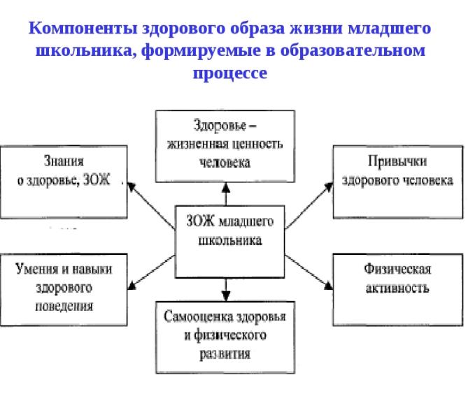 Компоненты здоровогообраза жизни младшего школьника. Автор24 — интернет-биржа студенческих работ