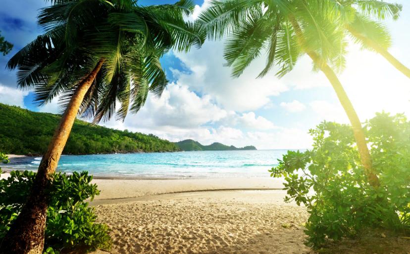 Тропики. Автор24 — интернет-биржа студенческих работ