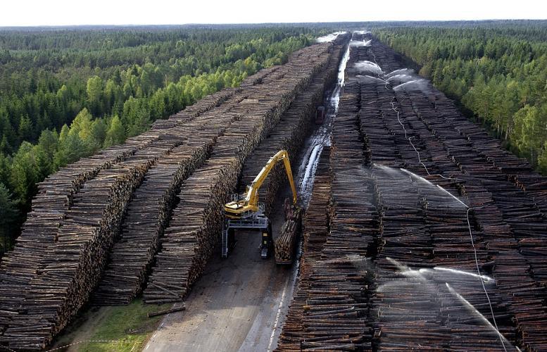 Вырубка лесов на российско-китайской границе. Автор24 — интернет-биржа студенческих работ