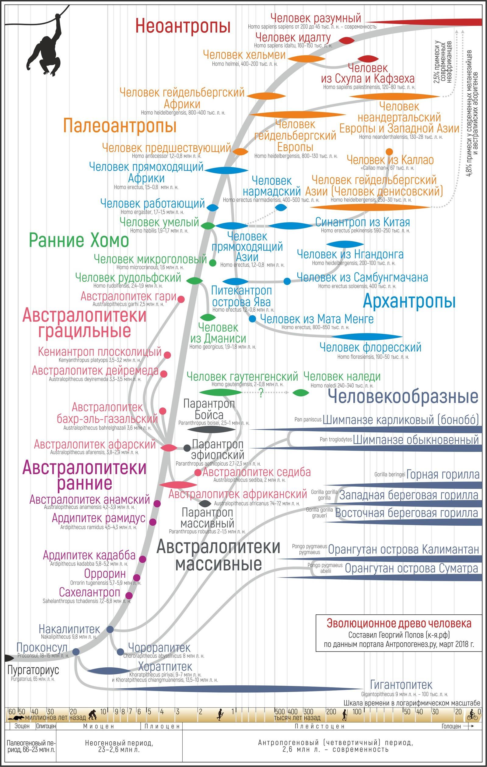 Стадии антропогенеза. Автор24 — интернет-биржа студенческих работ