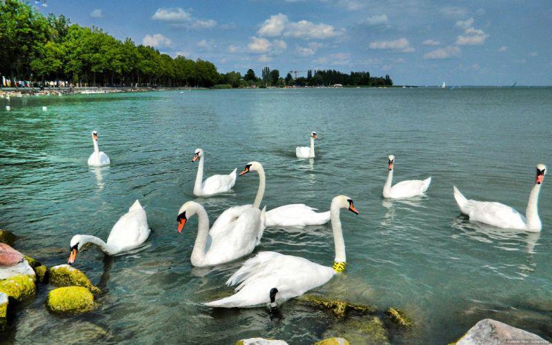Озеро Балатон. Автор24 — интернет-биржа студенческих работ