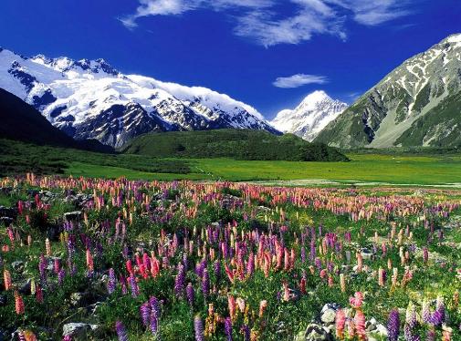 Ландшафт Новой Зеландии. Автор24 — интернет-биржа студенческих работ