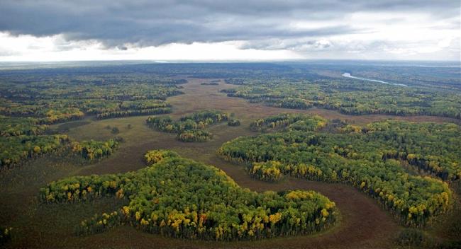 Ландшафт Западной Сибири. Автор24 — интернет-биржа студенческих работ