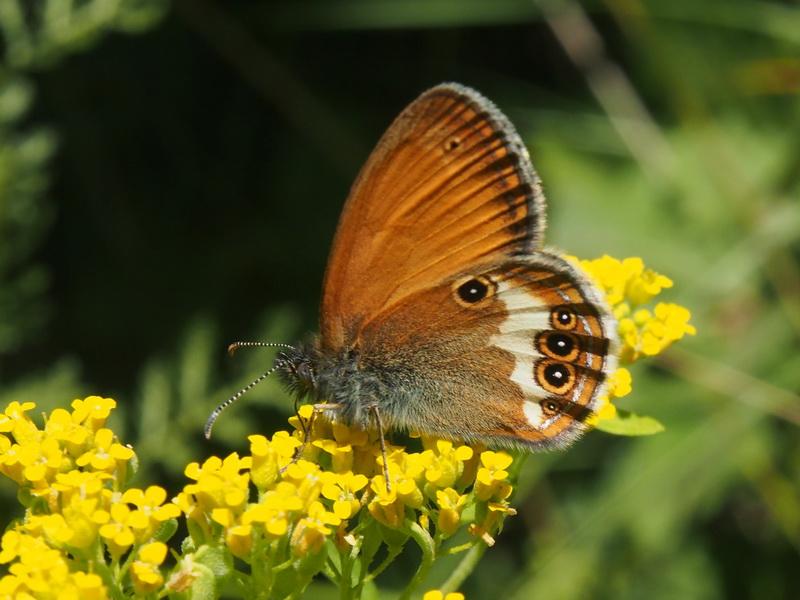 Бабочка. Автор24 — интернет-биржа студенческих работ