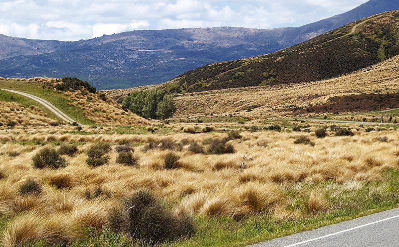 Степи Новой Зеландии. Автор24 — интернет-биржа студенческих работ