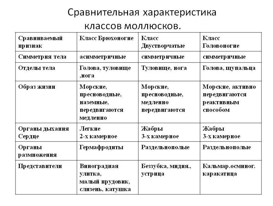 Сравнительная характеристика различных классов моллюсков. Автор24 — интернет-биржа студенческих работ